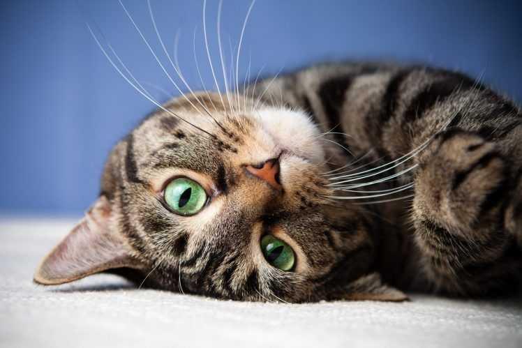 498731-face-animals-cat-748x499