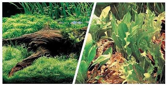 רקע לאקווריום מרינה צמחי מים במגוון גדלים