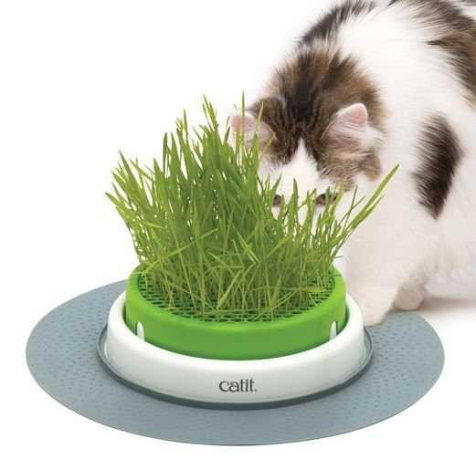 כלי לגידול דשא אנטי היירבול לחתול קטאיט סנסז CATIT