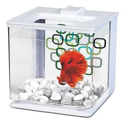 אקווריום פלסטיק מרינה לדגי קרב לבן 2.5 ליטר