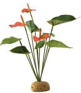 """פרח אנטוריום אקזוטרה בגובה 29 ס""""מ"""