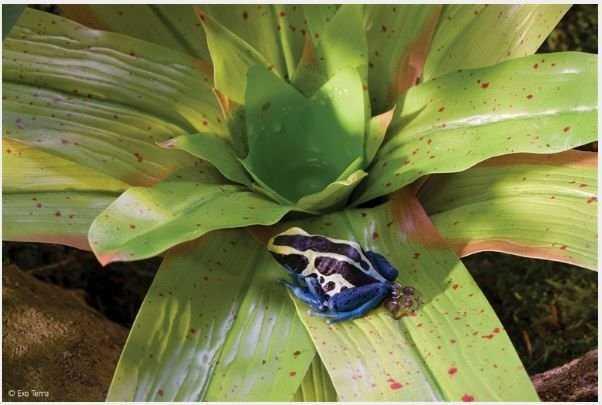 דקורציית צמח לצפרדעים אקזוטרה