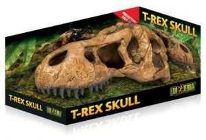 גולגולת דינוזאור לזוחלים אקזוטרה