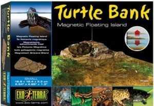 אי צבים אקזוטרה בשני גדלים