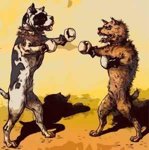 קרבות כלבים