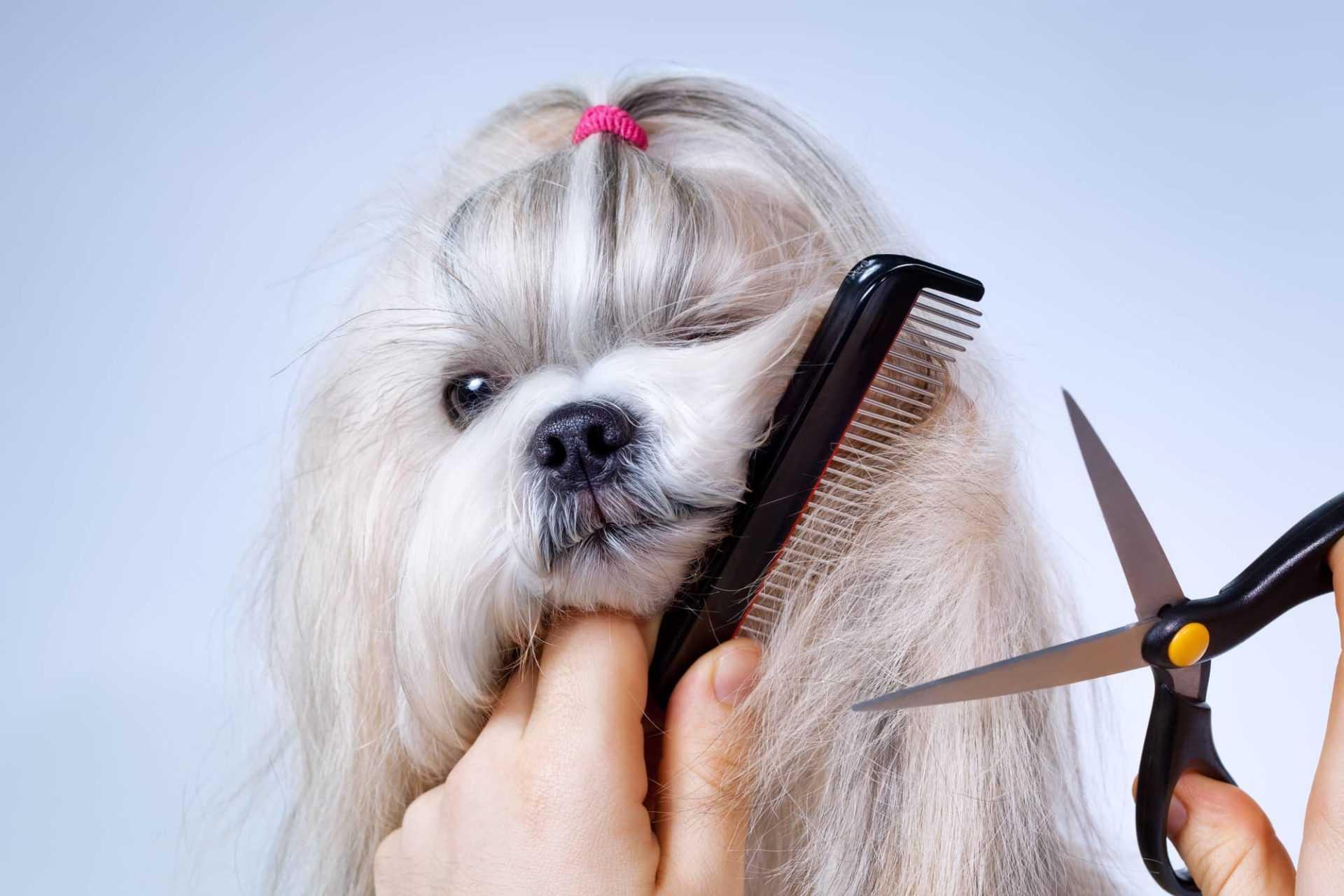 איך לספר את הכלב שלכם עם מכונת תספורת?