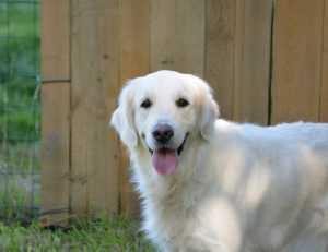 כלבי נחייה – עשר עובדות מעניינות