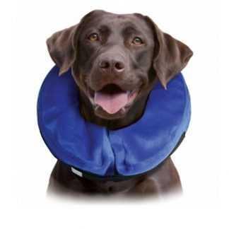 קולר אליזבת לכלבים אחרי ניתוח