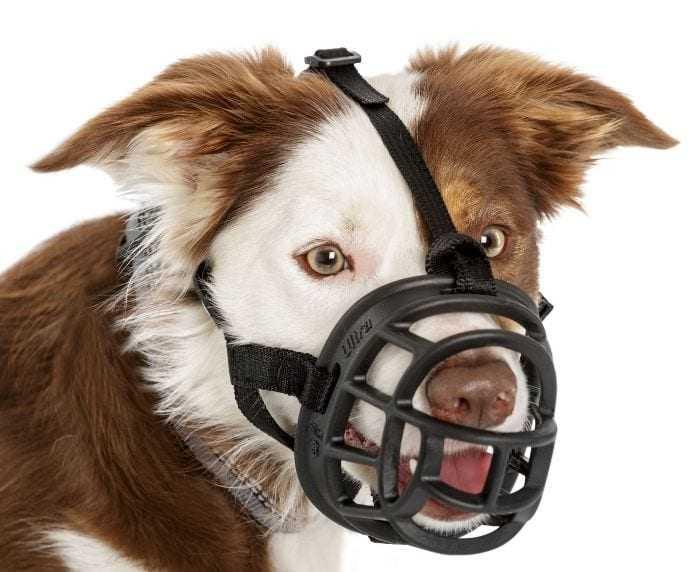 בסקרוויל מחסום לכלב מידה 1